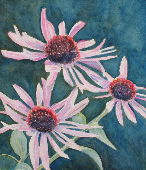 Watercolor of Cone Flowers