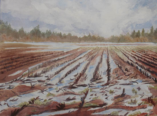 Spring Flood, painting of a field by Jenny Armitage