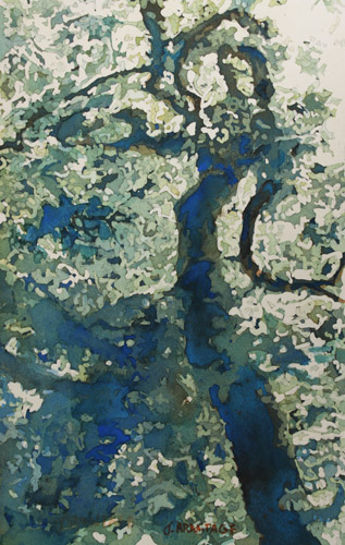 Old Woman, Watercolor Painting of a Tree by Jenny Armitage
