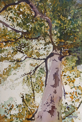 Lithe Birch, Original Painting by Jenny Armitage