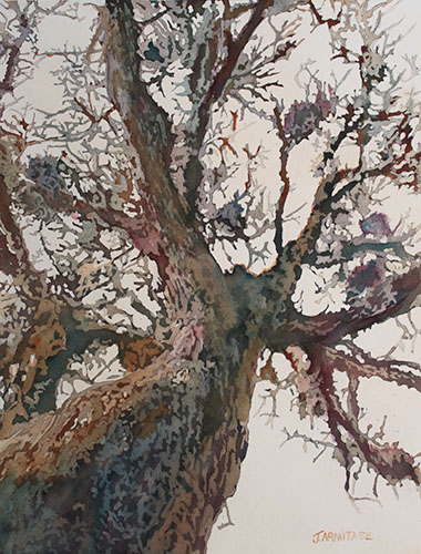 Looking Up at An Oak, Original Watercolor Painting by Jenny Armitage