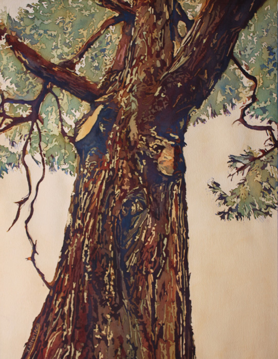 Giant Pine, Original Watercolor Painting by Jenny Armitage