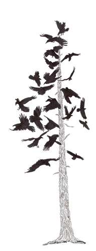 The Raven Tree, Drawing by Jenny Armitage