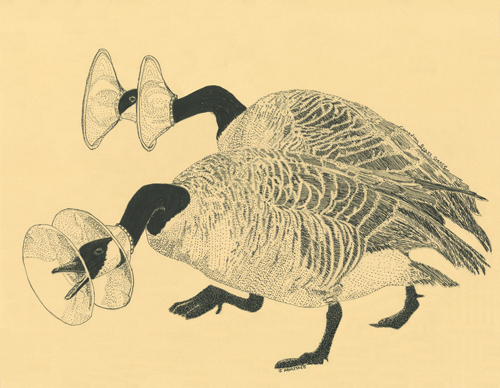Canadian Brass Geese, Funny Drawing by Jenny Armtiage