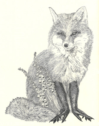 Foxgloves a Surreal Drawing of a Fox in Pen by Jenny Armitage