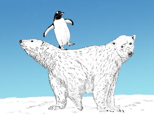 Bi-polar Bear II, digital drawing by Jenny armitage